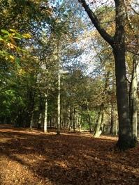 Autumn-2012-2.JPG