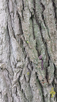 behind-a-tree.png